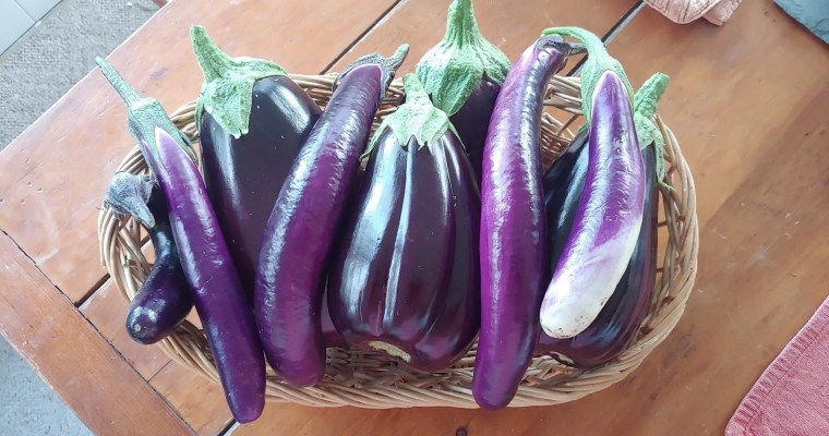 How to Freeze Eggplant