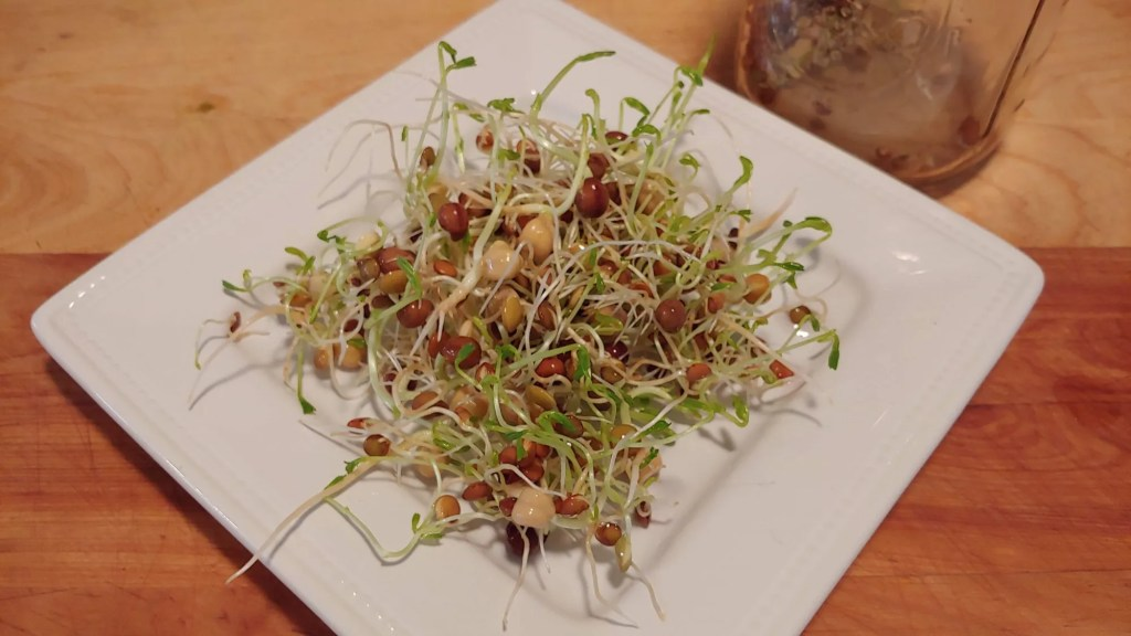 freshly grown sprouts on plate