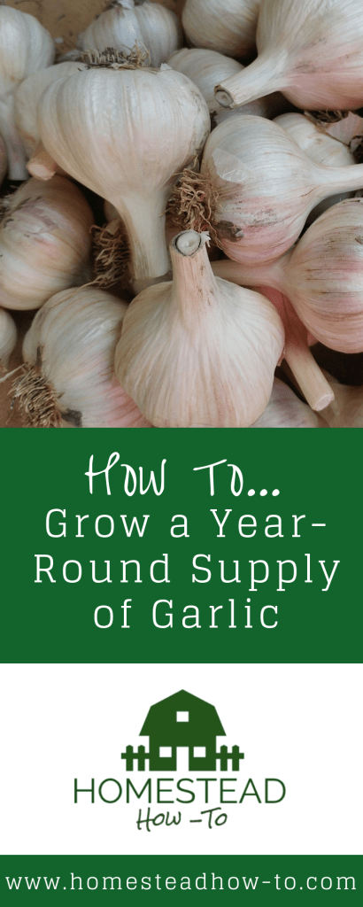 How to grow a years worth of garlic PIN
