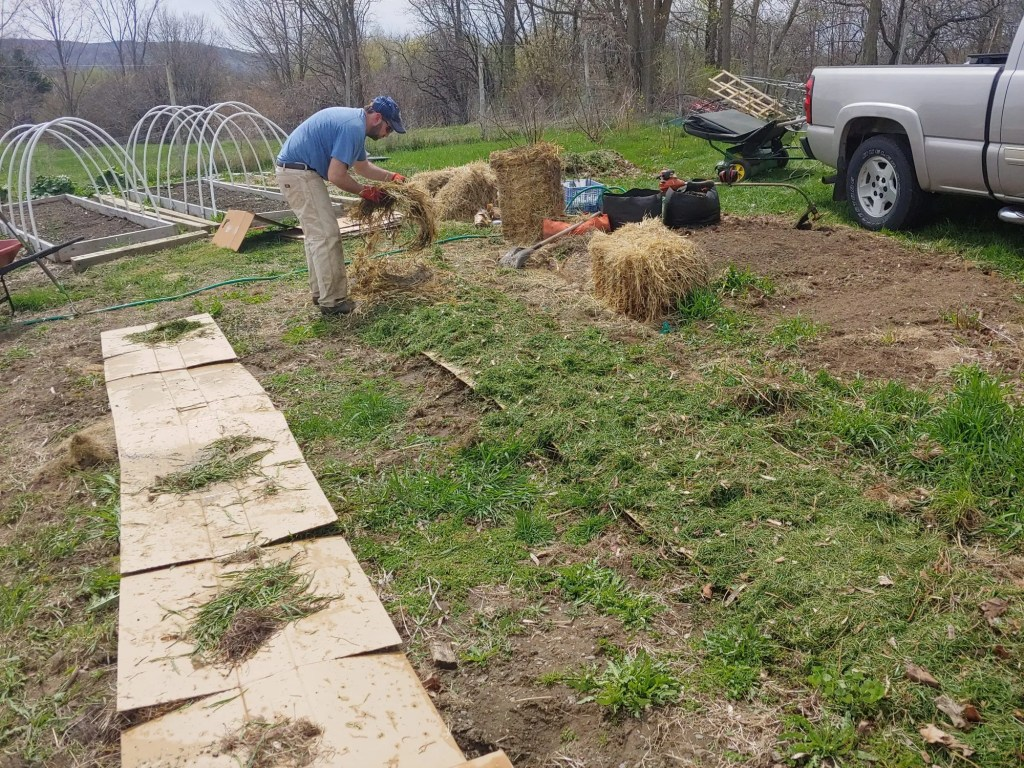 grass layer of sheet mulch