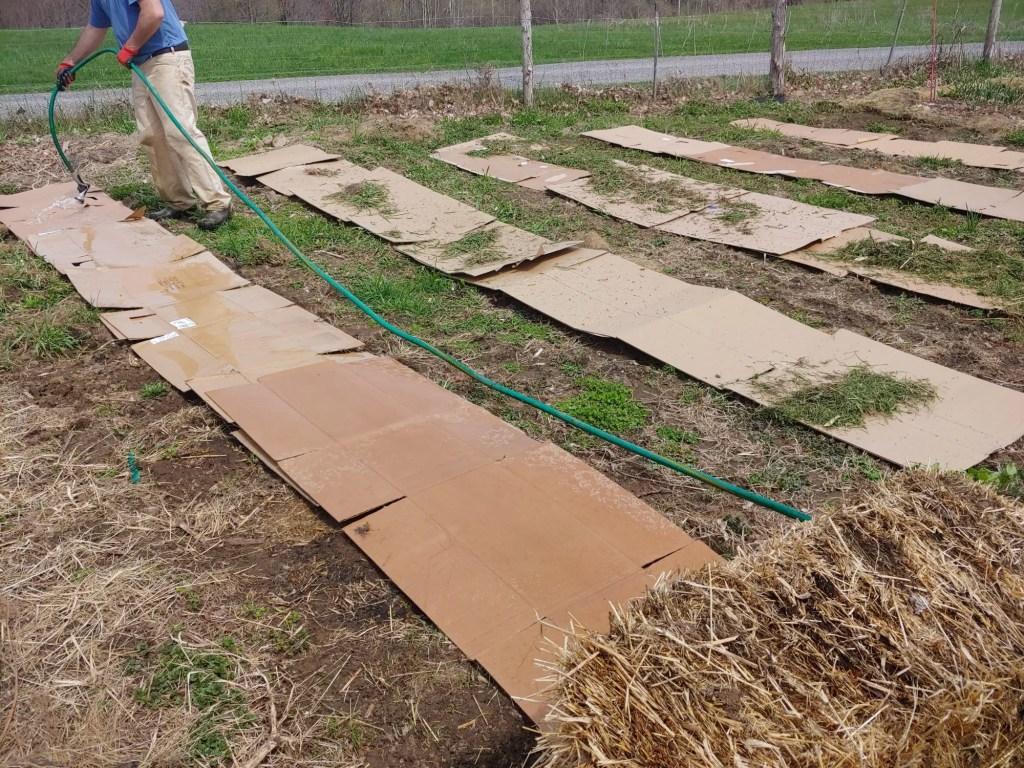 cardboard layer of sheet mulch