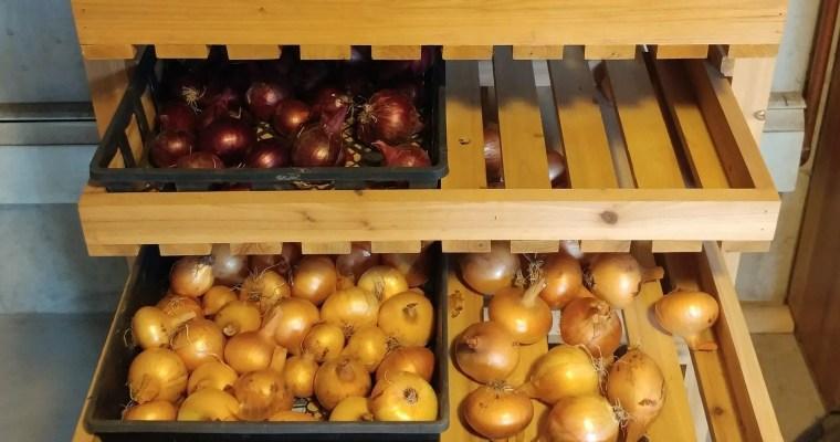 How to Grow Onions: Three Ways