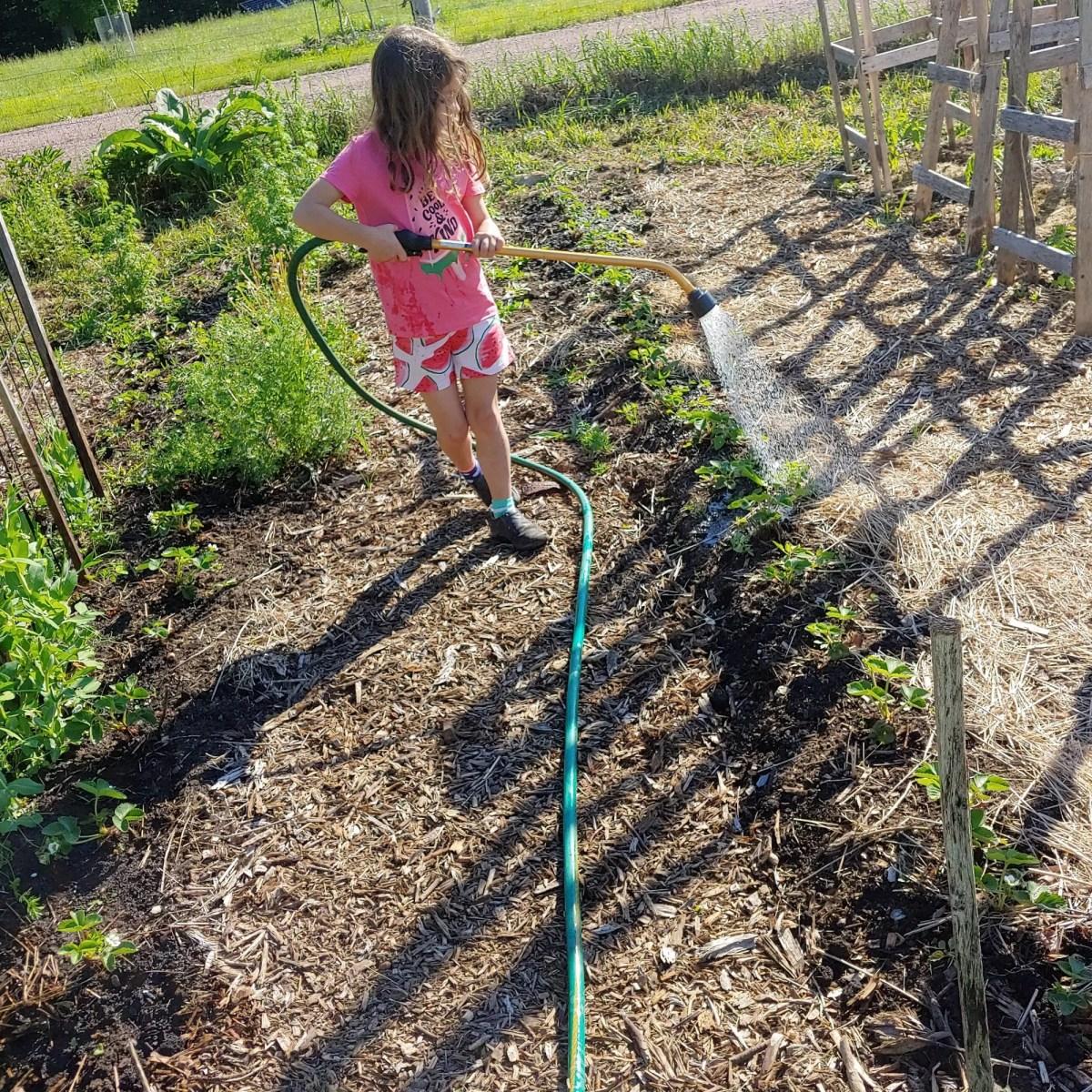 girl watering strawberry plants