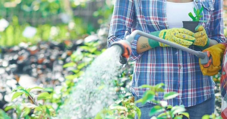 How to Water your Garden Effectively