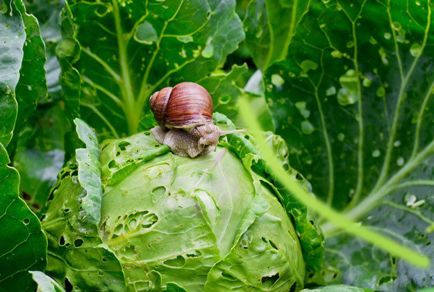 Getting Rid of Garden Pests | Gardening Tips To Earn Your Most Fruitful Yield Yet