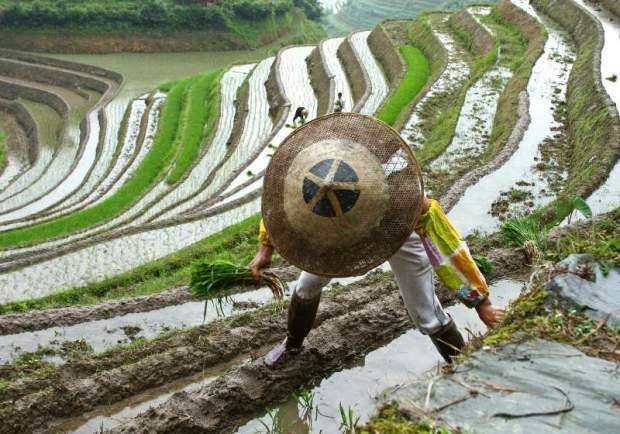 10 Terrace Farming Around The World   Types Of Farming