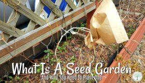seed-garden-post-300x172
