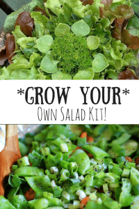 Grow Your Own Salad Kit -Super Fun For The Kids!