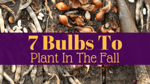 7 Bulbs To Plant In The Fall For Mind Blowing Flowers Next Spring