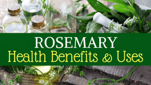 Rosemary Herb Health Benefits and Uses