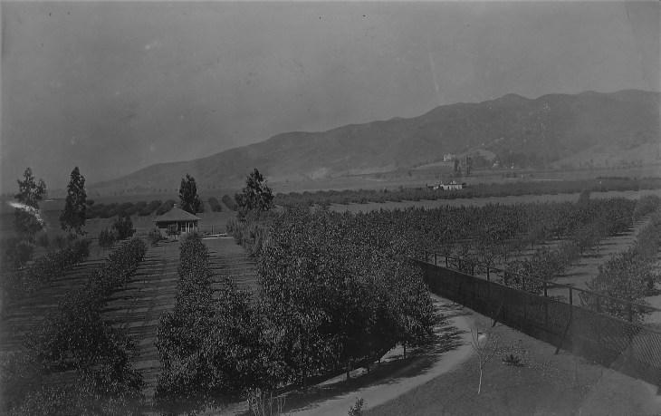 Hodgson Ranch Hollywood 1890s
