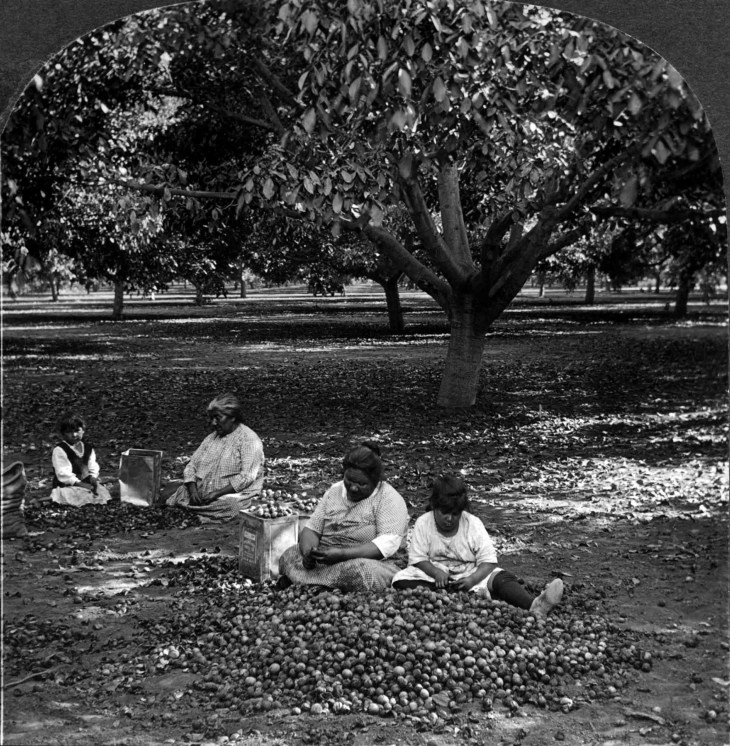 0217042 158 Walnuts Shelling And Picking Walnuts By Hand El Monte Calif 2010.62.1.1.jpg