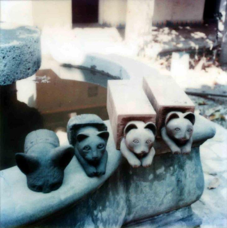 1896La Casa Nueva Courtyard Balcony Cats And Dogs Heads On Fountain 99.5.33.915