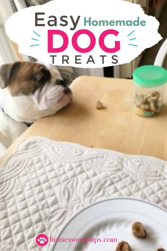 dog looking to get his easy homemade treat off the kitchen table