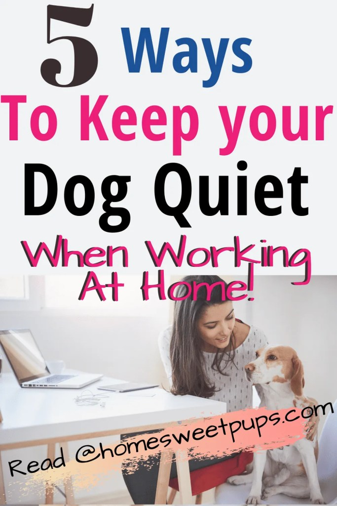 woman working at home keeping dog quiet