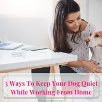 ways to keep your dog quiet while working at home