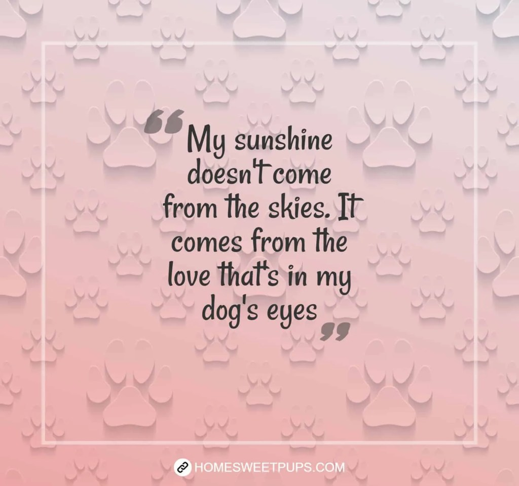 "Quote about dogs loyalty "" My sunshine doesn't come from the skies. It comes from the love that's in my dog""s eyes"""