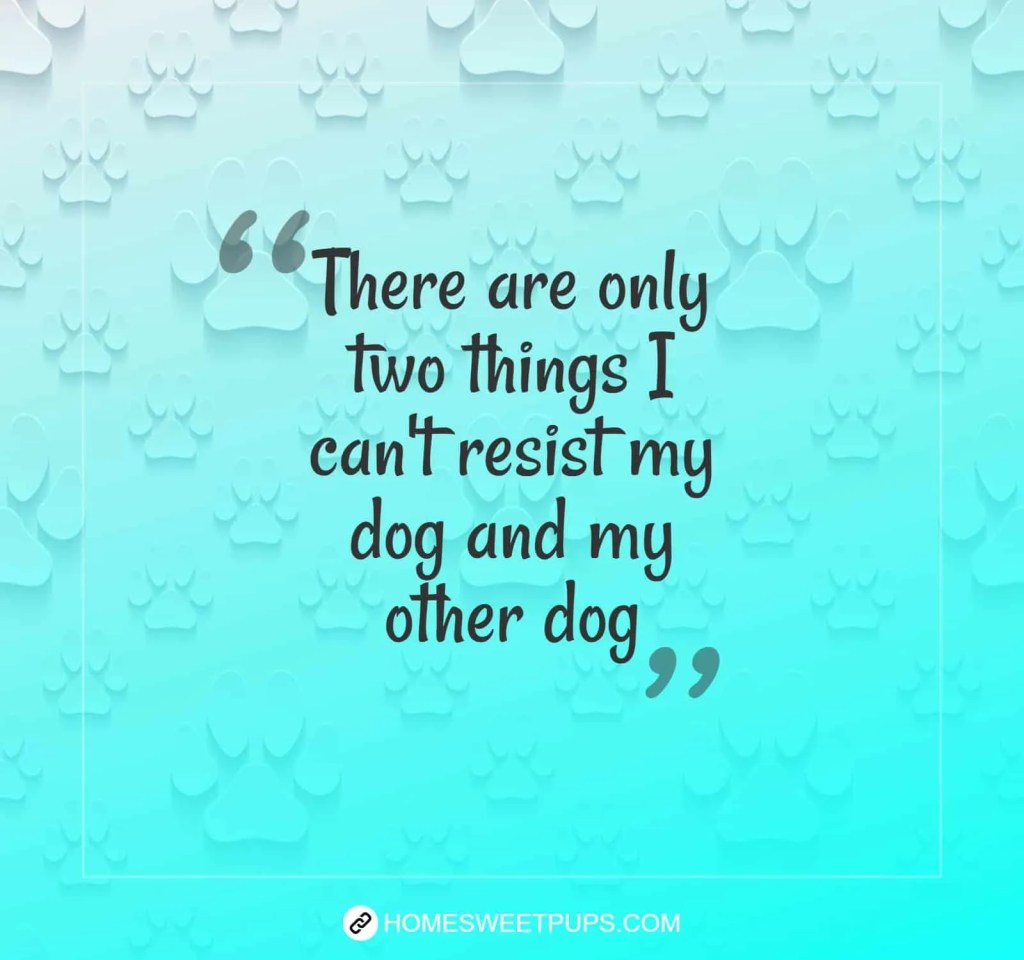 "Quote about dogs loyalty "" There are only two things I can't resist my dog and my other dog"""