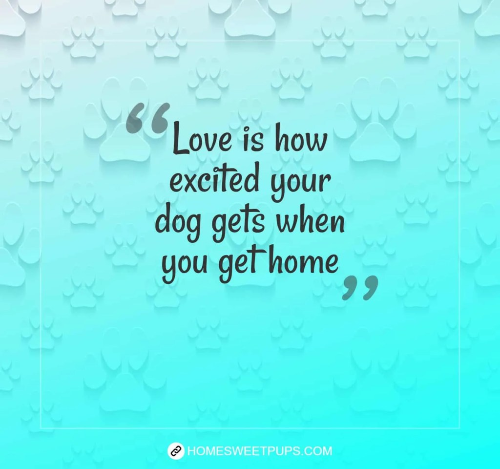 "Quote about dogs loyalty ""Love is how excited your dog gets when you get home"""