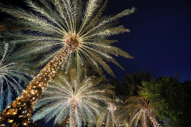 Christmas Lighting Installation Naples, Florida