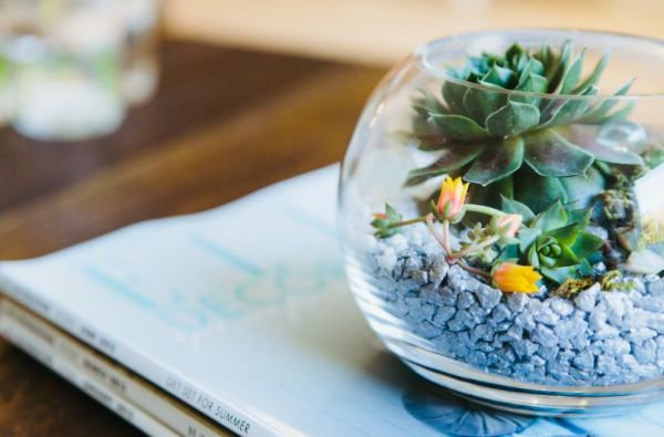 pair-up-smaller-terrariums