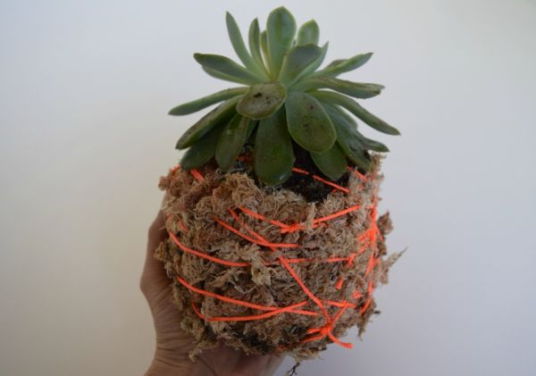 Moss ball-hanging pot