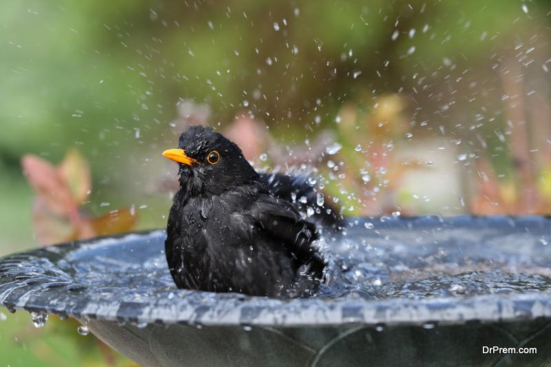 Bird bath ideas