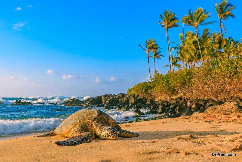 The-Island-of-Hawaii