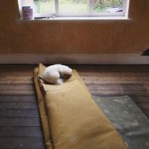 floorboards before sanding
