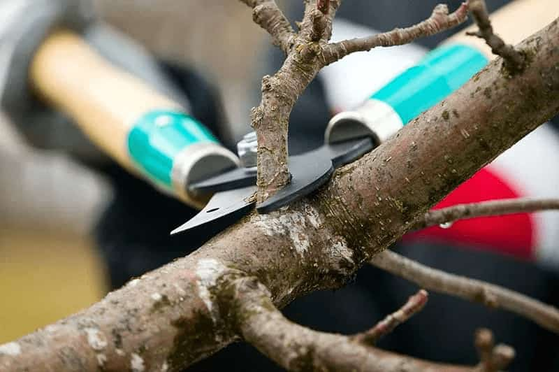 6 Steps to Spring Tree Care