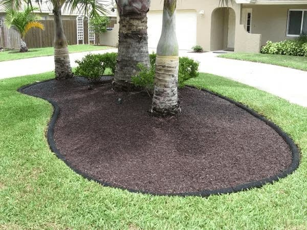 Nine Tree Care Tips & Techniques*