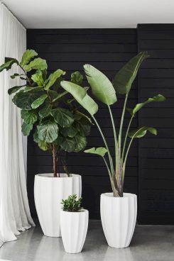 Apartment Indoor Gardening With Tropic Indoor Plants 72
