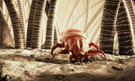 How To Get Rid Of Dust Mites In 4 Easy Steps