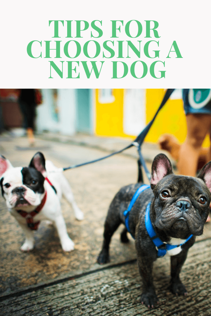 tips for choosing a new dog