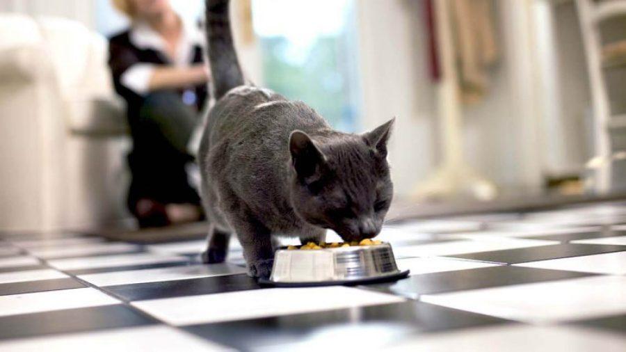cat chronic diarrhea