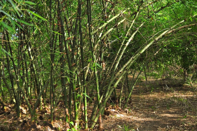 File:Bamboo garden.jpg - Wikimedia Commons