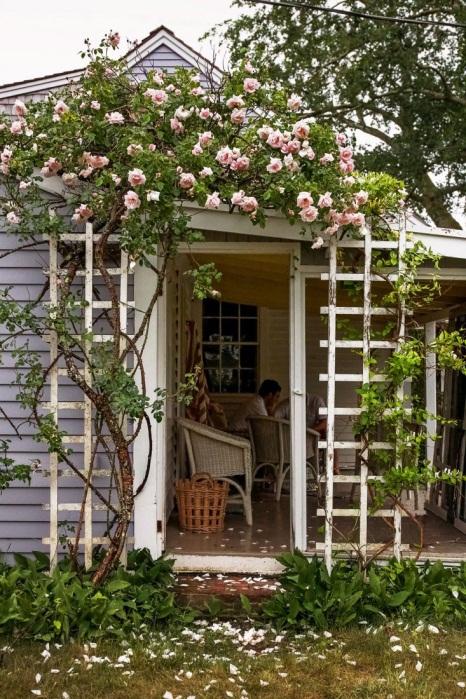 D:\@ARSIP\2020\OKTOBER ARTIKEL\rose-trellis-new-dawn-roses.jpg