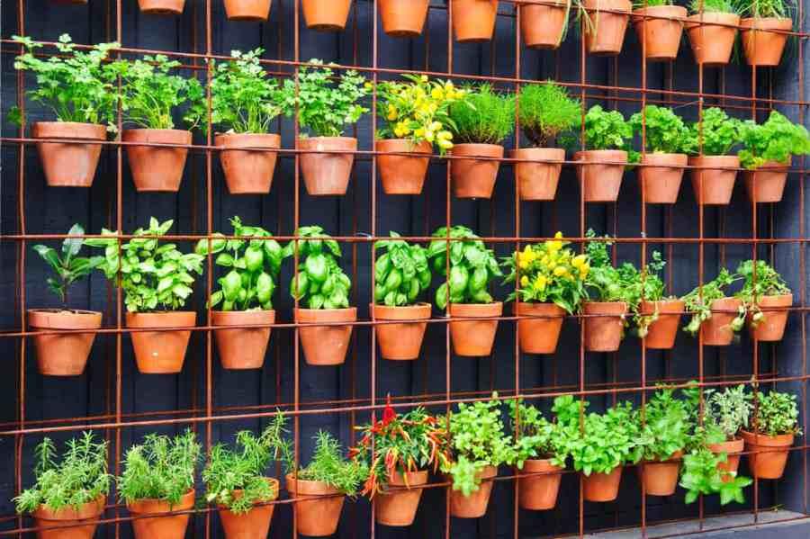 How to Easily Grow Food in Your Vertical Garden - Garden Tabs