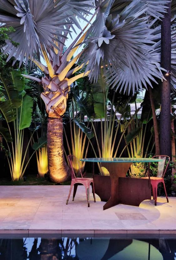 scale and drama of a tropical garden