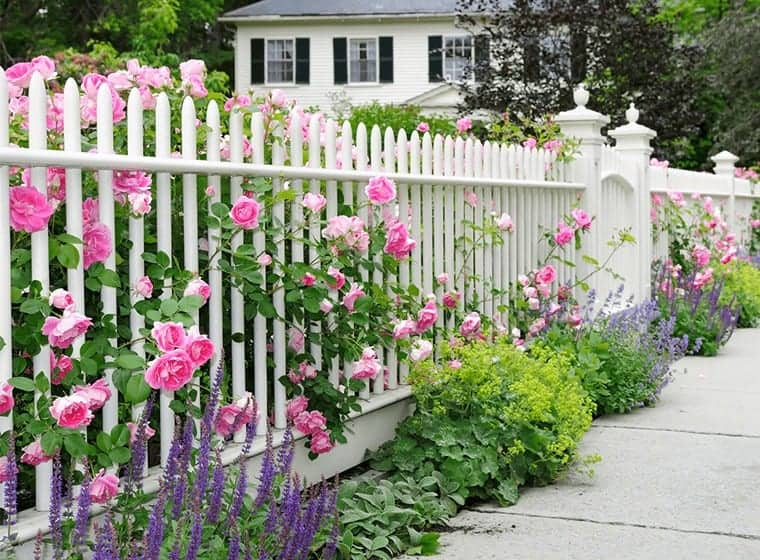 White Fence Blended With Rose