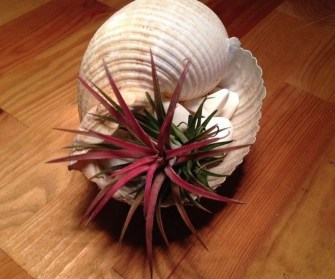 Amazing Air Plants Decor Ideas 05