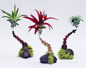 Amazing Air Plants Decor Ideas 11