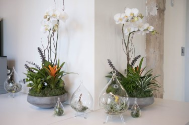 Amazing Air Plants Decor Ideas 14