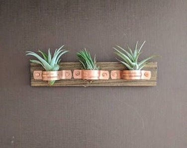 Amazing Air Plants Decor Ideas 15