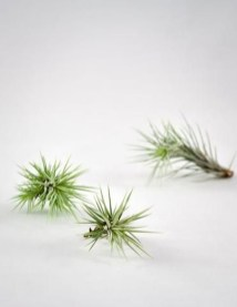 Amazing Air Plants Decor Ideas 17