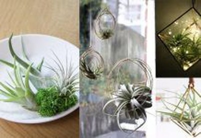 Amazing Air Plants Decor Ideas 21