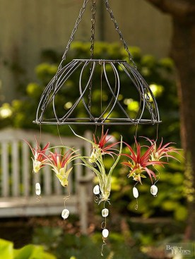 Amazing Air Plants Decor Ideas 31