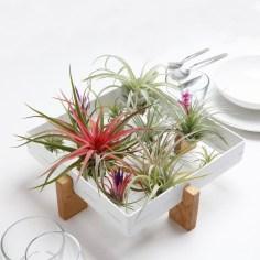 Amazing Air Plants Decor Ideas 35