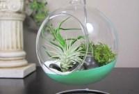 Amazing Air Plants Decor Ideas 38