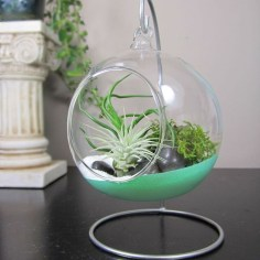 Amazing Air Plants Decor Ideas 38